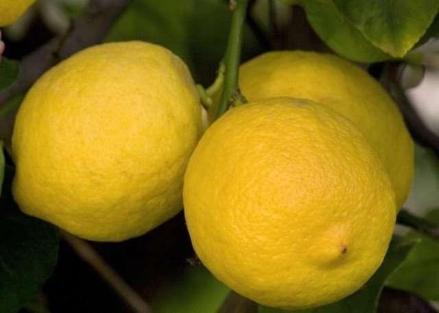 limone per pulire il bagno